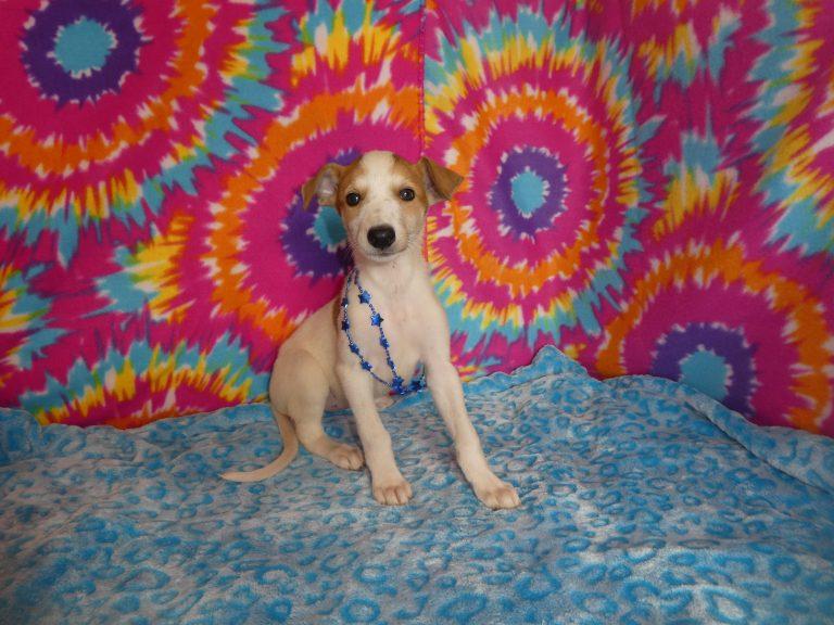 #2G  Greyhound