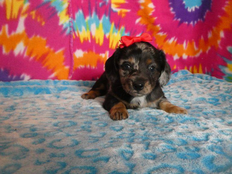 B & S Kennels: Boxer, Bassett, Husky, Beagle & Terrier